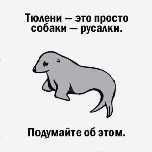 humor-a_kit-20141002-026